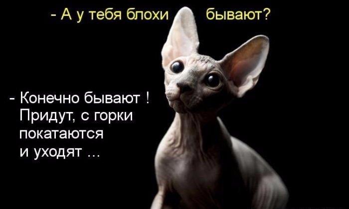 http://forumupload.ru/uploads/000d/6b/61/4825/38454.jpg