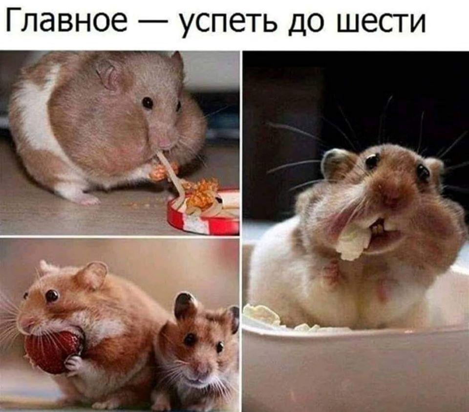 http://forumupload.ru/uploads/000d/6b/61/4825/39736.jpg