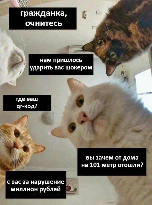 http://forumupload.ru/uploads/000d/aa/a3/2/t49019.jpg