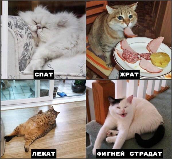 http://forumupload.ru/uploads/000d/aa/a3/2/t633945.jpg
