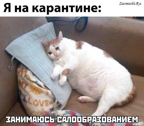 http://forumupload.ru/uploads/000d/aa/a3/2/t847036.jpg