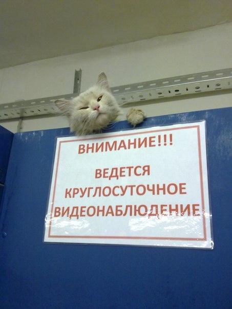 http://forumupload.ru/uploads/000d/aa/a3/2/t860846.jpg