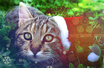 http://forumupload.ru/uploads/000e/4e/28/23-1-f.jpg