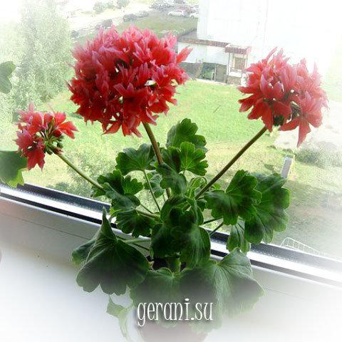 http://forumupload.ru/uploads/000e/81/4f/3/57087.jpg