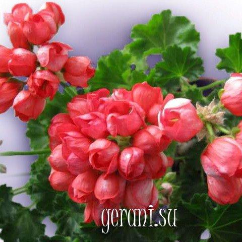 http://forumupload.ru/uploads/000e/81/4f/3/58335.jpg