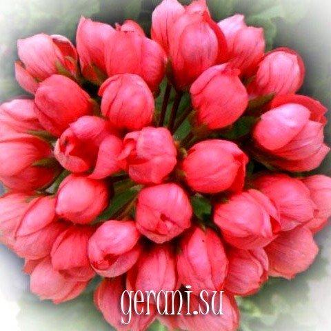 http://forumupload.ru/uploads/000e/81/4f/3/68414.jpg