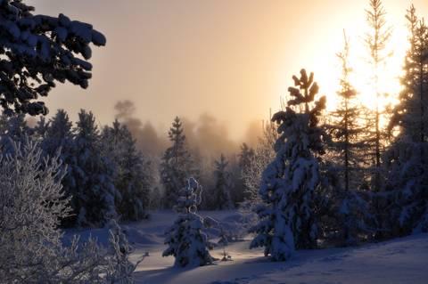 http://forumupload.ru/uploads/000e/ad/4d/32240/t760071.jpg