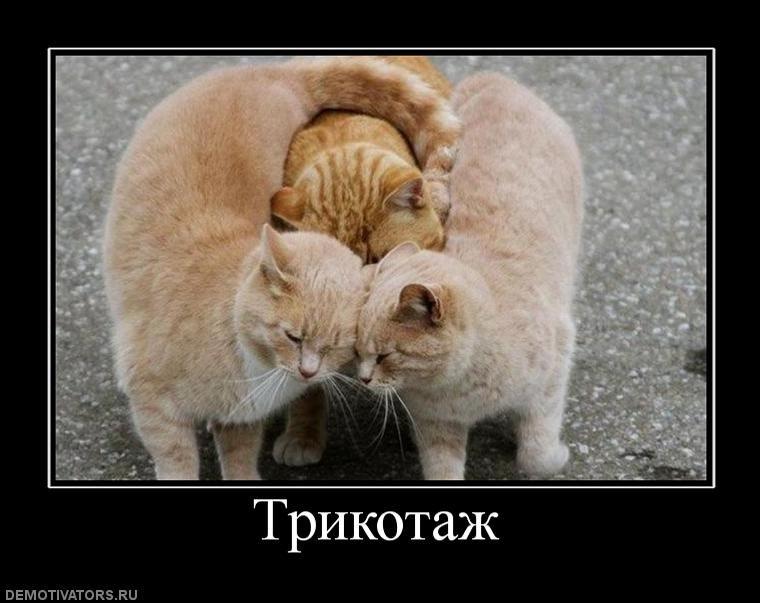 http://forumupload.ru/uploads/0010/04/81/48-4-f.jpg