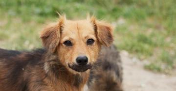 В СПб могут появиться первые городские приюты для бездомных животных