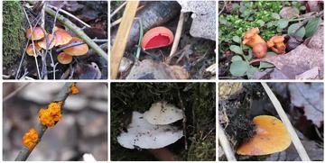Петербуржцы в январе ходят по грибы