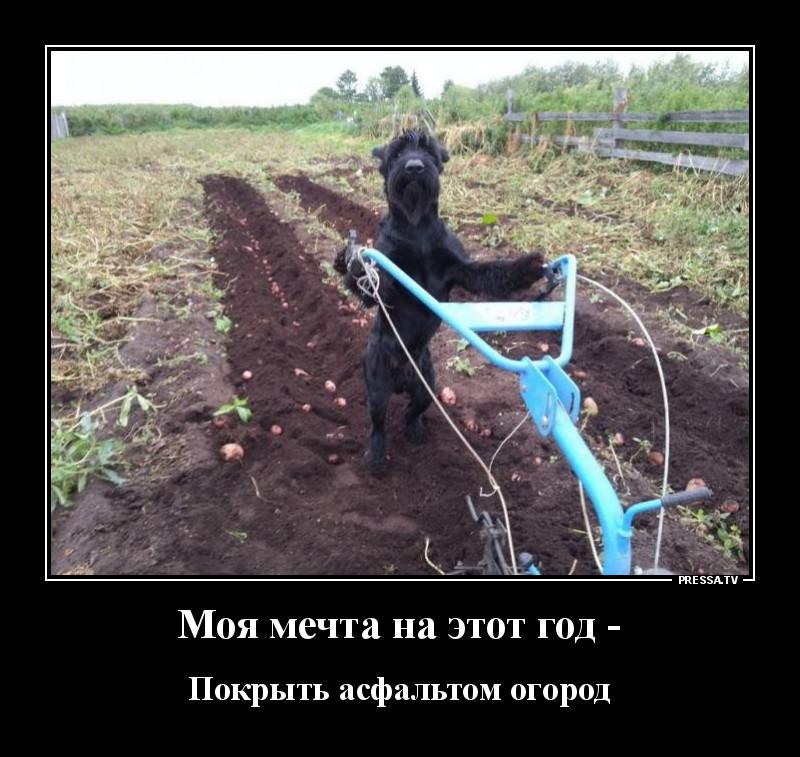 https://forumupload.ru/uploads/0011/7a/32/7512/781716.jpg