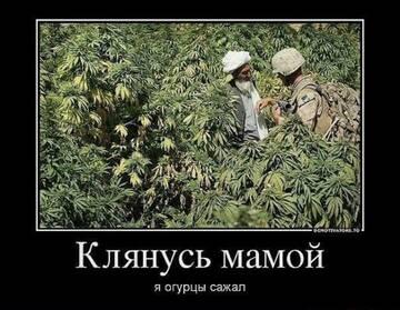 http://forumupload.ru/uploads/0011/e4/51/21/t552931.jpg