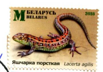 http://forumupload.ru/uploads/0012/46/3b/34/t67546.jpg
