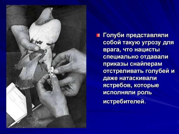 http://forumupload.ru/uploads/0012/5a/ef/2/t900032.jpg
