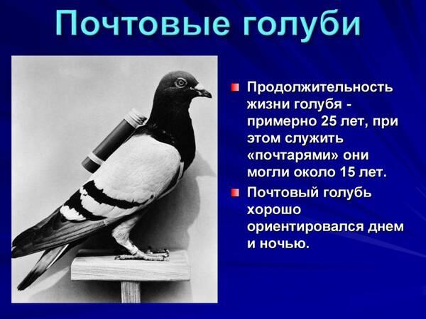 http://forumupload.ru/uploads/0012/5a/ef/2/t963417.jpg