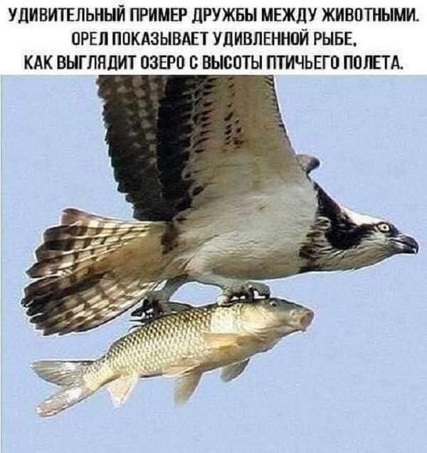 http://forumupload.ru/uploads/0012/d6/0d/518/t304688.jpg