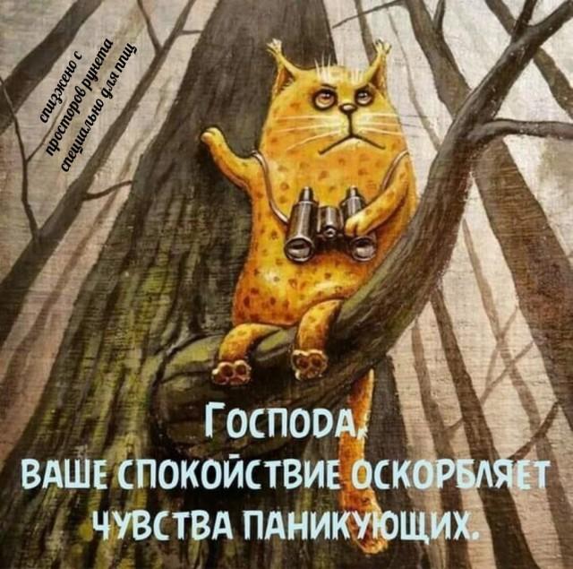 https://forumupload.ru/uploads/0013/1f/fe/254/885272.jpg