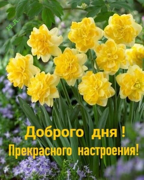 http://forumupload.ru/uploads/0013/1f/fe/411/t456898.jpg