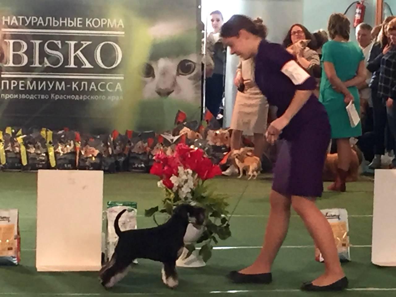 http://forumupload.ru/uploads/0013/26/e2/64/803883.jpg