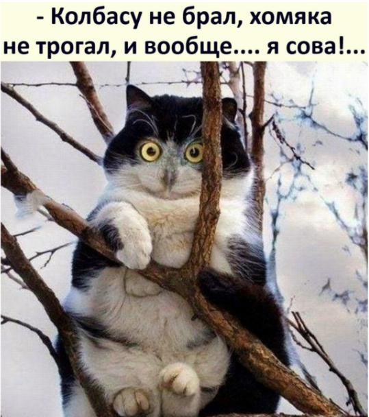 http://forumupload.ru/uploads/0013/8b/ae/260/898830.png