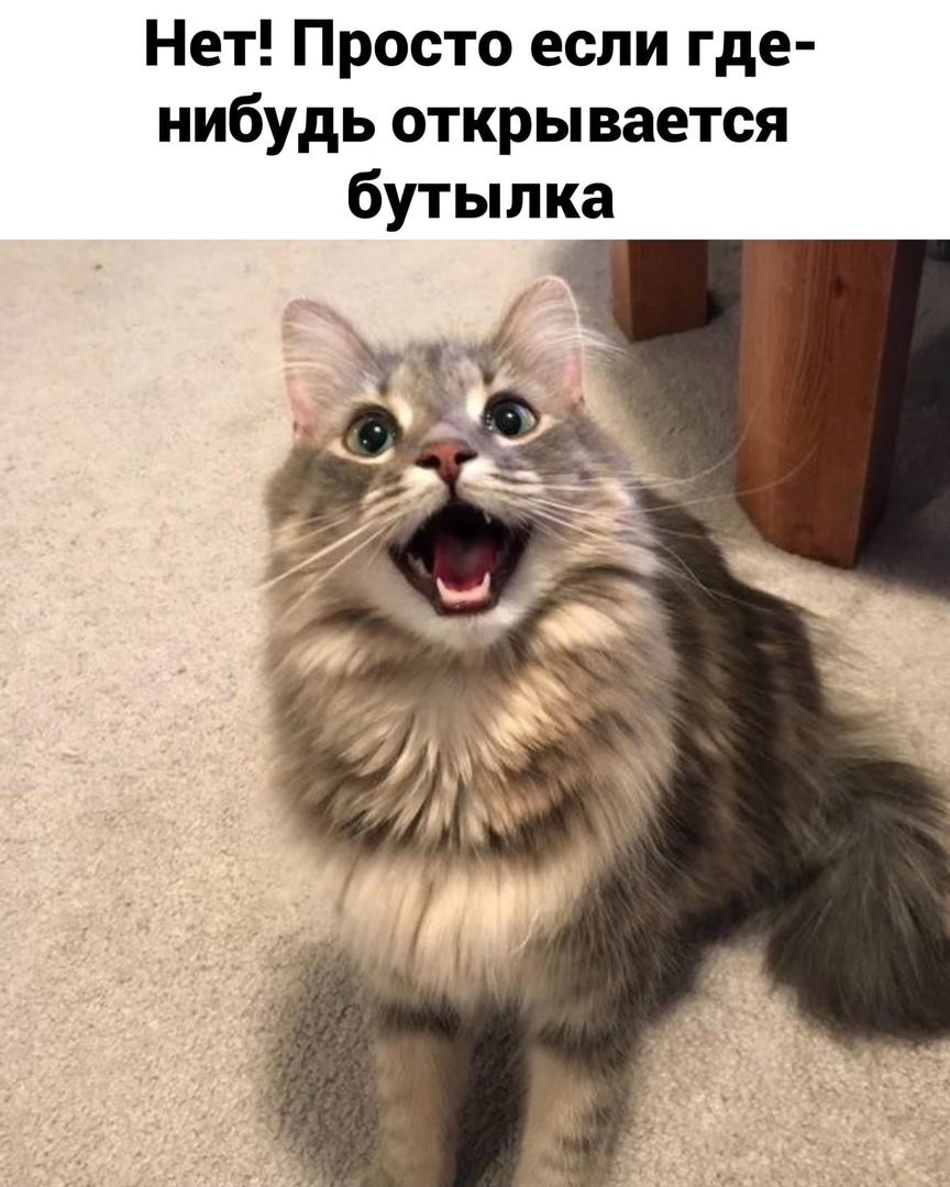 http://forumupload.ru/uploads/0014/6e/c5/641/116399.jpg