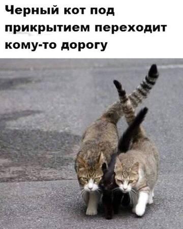 http://forumupload.ru/uploads/0017/a0/a2/137/t290802.jpg