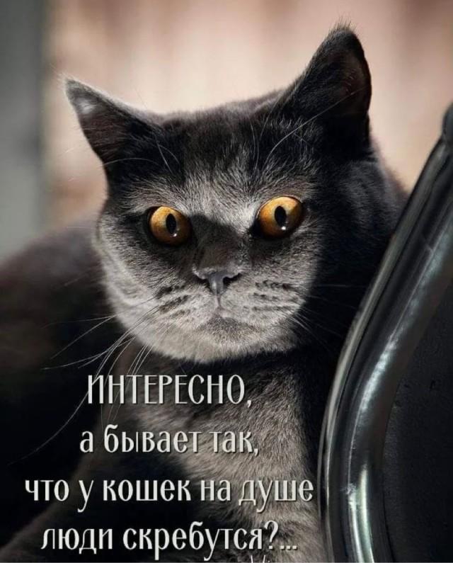 https://forumupload.ru/uploads/0019/3c/8c/2/681646.jpg