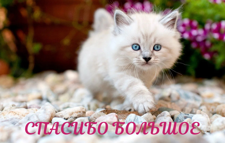 https://forumupload.ru/uploads/0019/3c/8c/88/539679.jpg