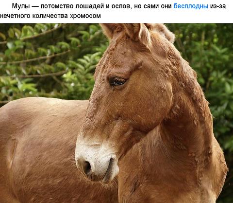 https://forumupload.ru/uploads/0019/82/12/279/t251885.png