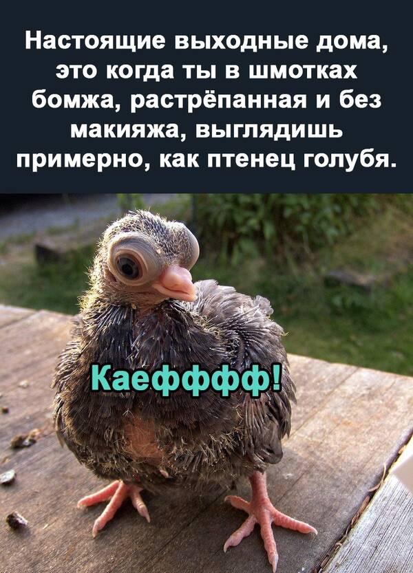 https://forumupload.ru/uploads/0019/82/12/369/t560571.jpg