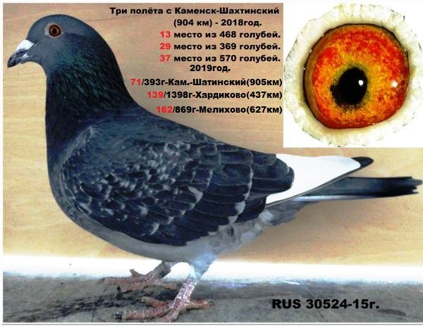 http://forumupload.ru/uploads/0019/8b/76/4/t88131.jpg