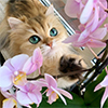 http://forumupload.ru/uploads/0019/c8/05/398/405828.jpg
