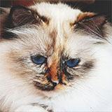 http://forumupload.ru/uploads/0019/c8/05/652/674990.jpg