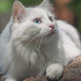 http://forumupload.ru/uploads/0019/c8/05/681/t831050.jpg