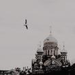 http://forumupload.ru/uploads/0019/e7/78/1909/482805.png
