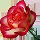 http://forumupload.ru/uploads/001a/04/99/2/t94177.png