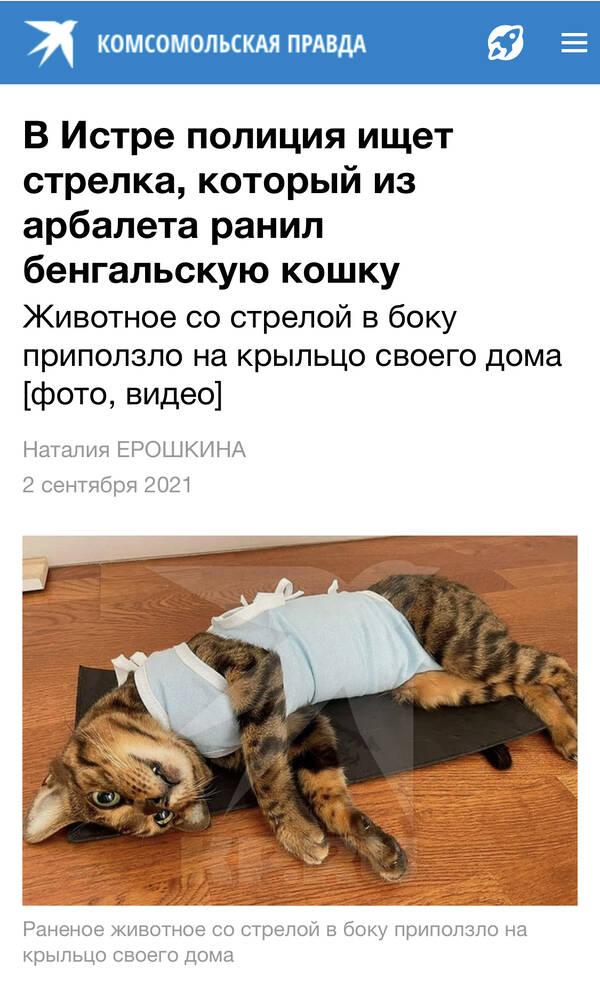 http://forumupload.ru/uploads/001a/8c/05/2/t78097.jpg