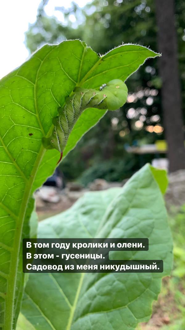 http://forumupload.ru/uploads/001a/8c/05/2/t887353.jpg