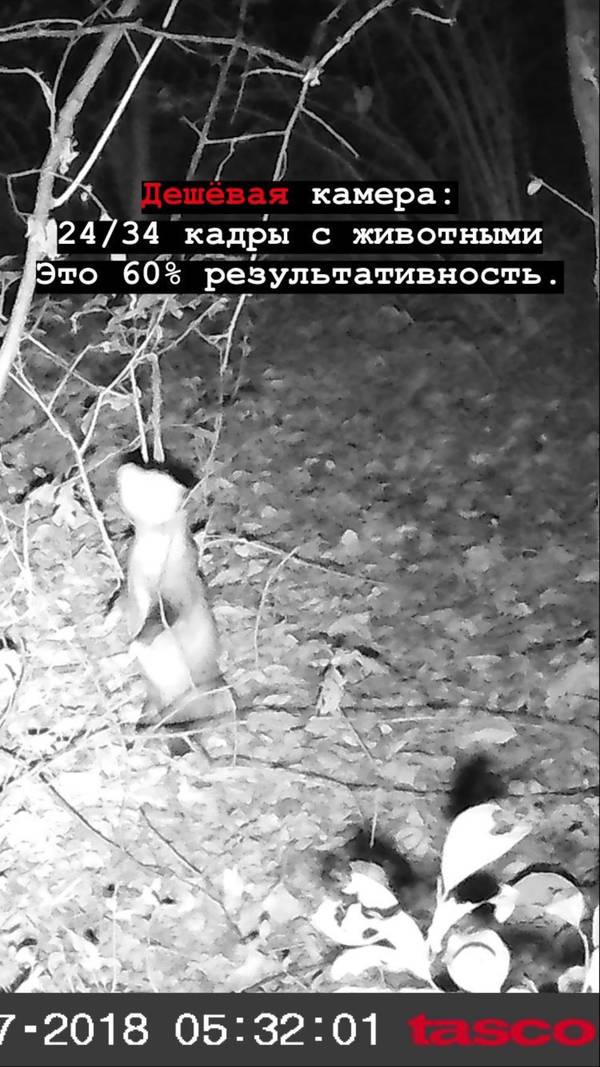 http://forumupload.ru/uploads/001a/8c/05/2/t94379.jpg