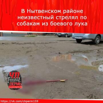 http://forumupload.ru/uploads/001a/8c/05/234/t181516.jpg