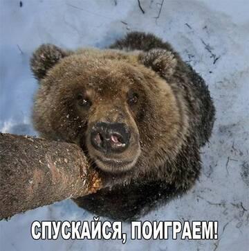 http://forumupload.ru/uploads/001a/8c/05/249/t686680.jpg