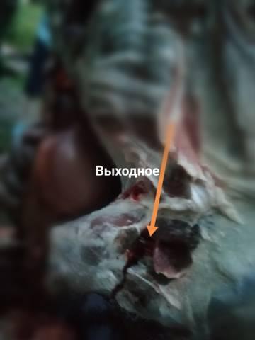 https://forumupload.ru/uploads/001a/8c/05/76/t888151.jpg