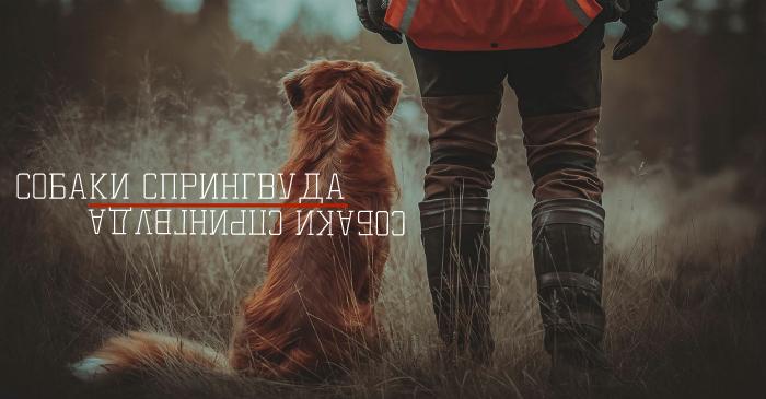 http://forumupload.ru/uploads/001a/a9/04/2/38770.jpg