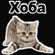 http://forumupload.ru/uploads/001a/d5/10/2/459553.png