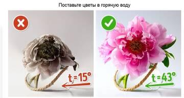 https://forumupload.ru/uploads/001a/d8/57/166/t893007.jpg