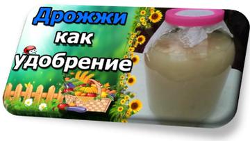 https://forumupload.ru/uploads/001a/e1/f2/2/t548420.png